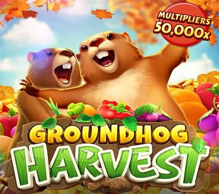 Groundhog Harvest-รูปเกม