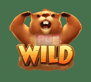 Groundhog Harvest-Wild